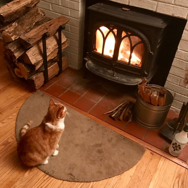 Early humans worshipped the sun. Present-day cats worship fire.