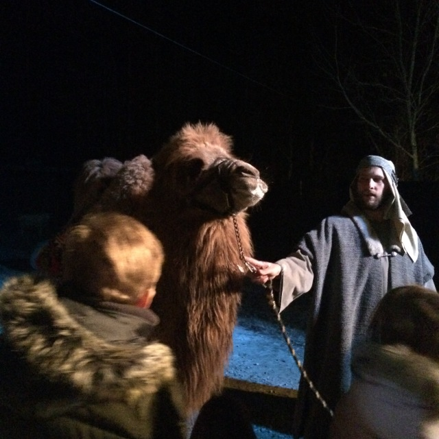 Photo of Bactrian Camel taken by Evelyn at Richmond Zoo on Friday!