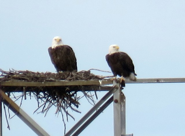 1eaglepair01