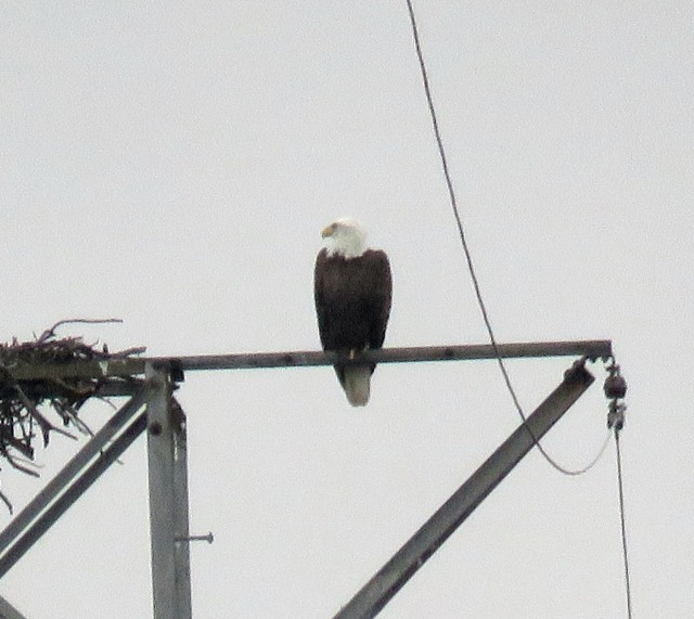 Eagle on the tower, north bank of the river