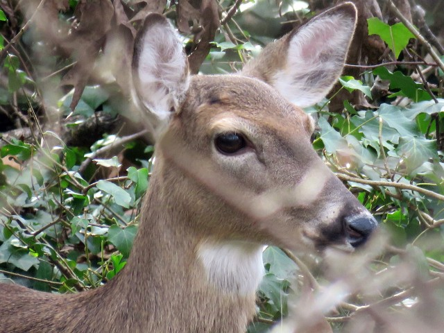 I don't know if that deer feels peaceful, but I certainly feel peaceful when I look at it