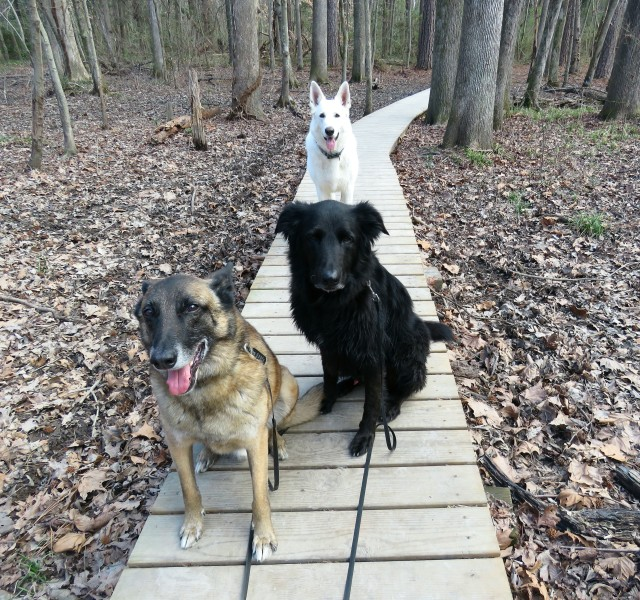 You cannot beat these three for hiking buddies.